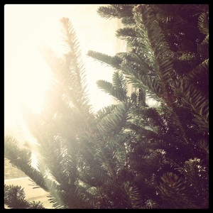 christmas tree sunlight