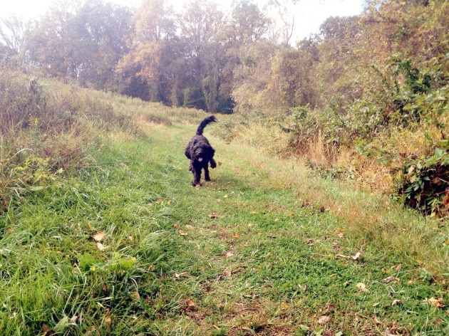 mowgli running