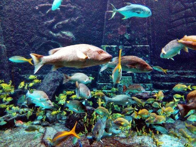 bahamas fish